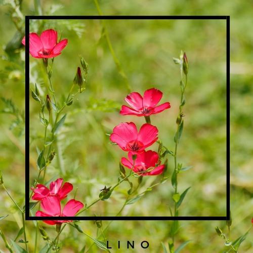 content_lino-tejido