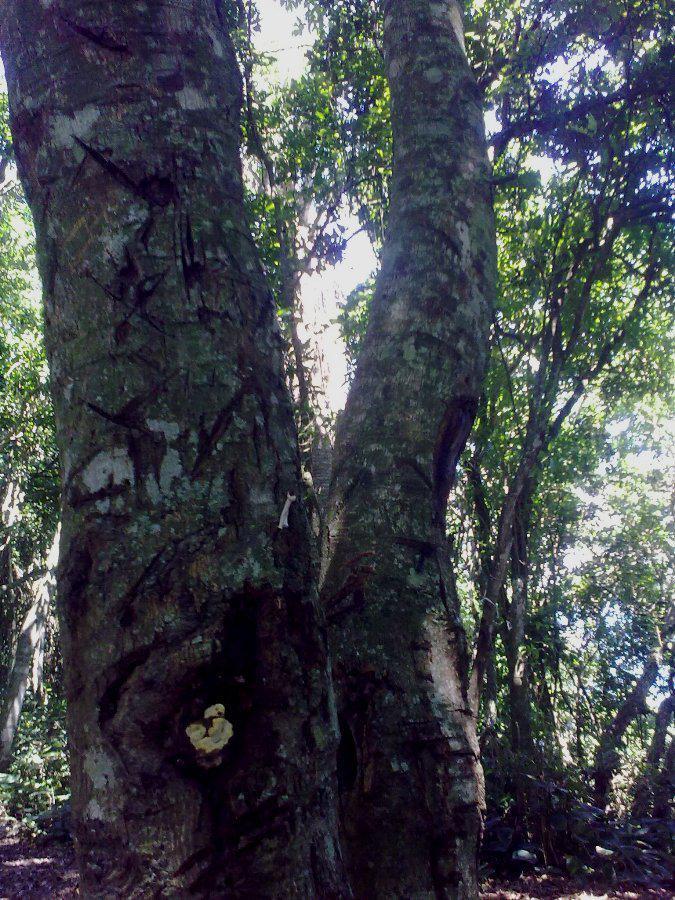 BosquesBrasil1