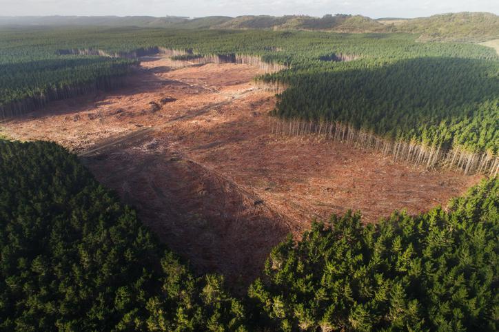 deforestación-consecuencias