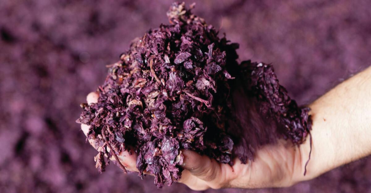 orujo-vino-cuero-vegetal-ecologico-industria-moda