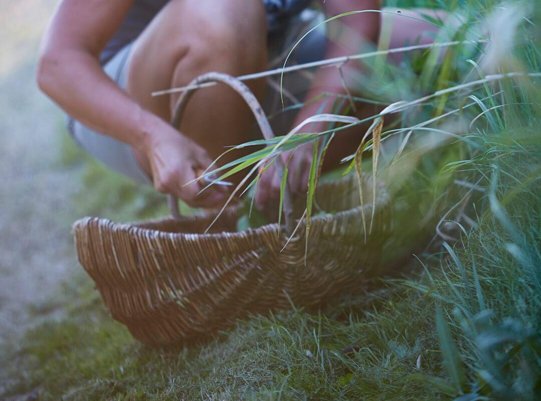 arboles-frutales-dinamarca-beneficios-naturaleza.04-02-2021.medio-ambiente