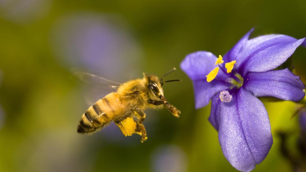 no-son-solo-las-abejas-moscas-y-hormigas-tambien-colaboran-en-la-polinizacion