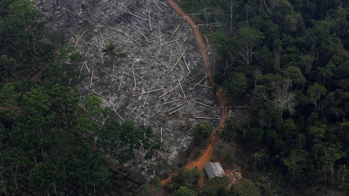 desforestación_amazonía