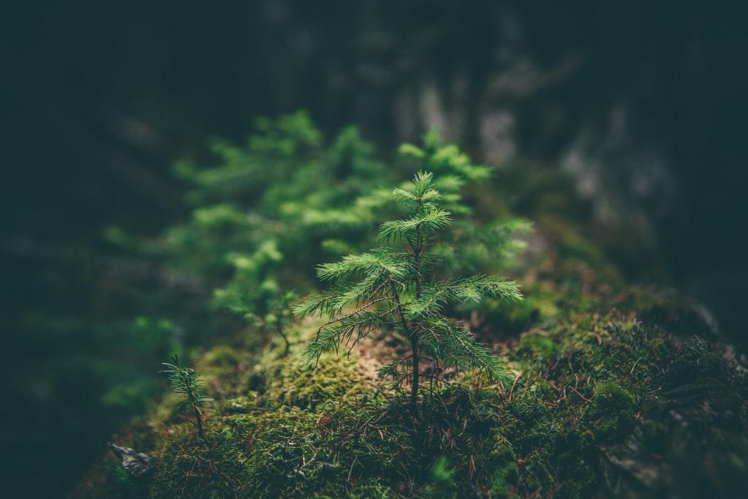 arbol-bosque-plantas-crisis-climatica