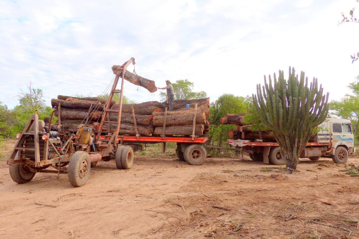 gran-chaco-deforestacion-argentina-15-1200x800