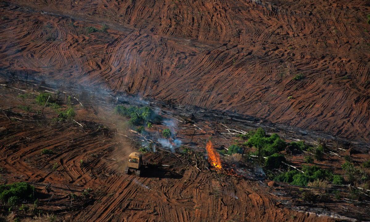 amazonas-ambiente-deforestacion.destruccion-2064
