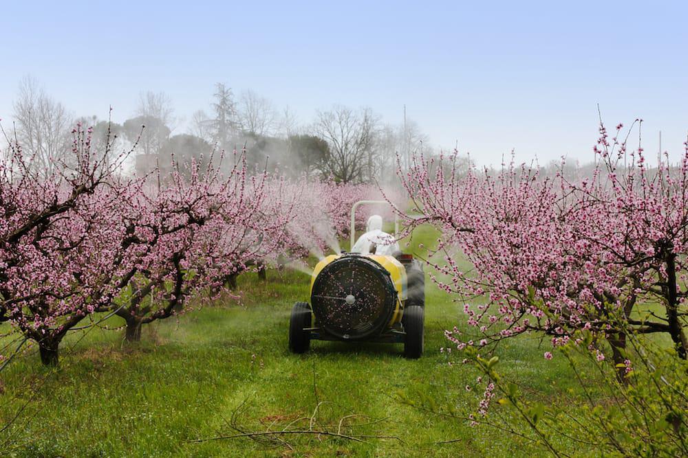 Pesticidas_46592572
