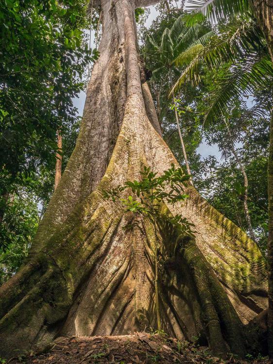 image2-tree