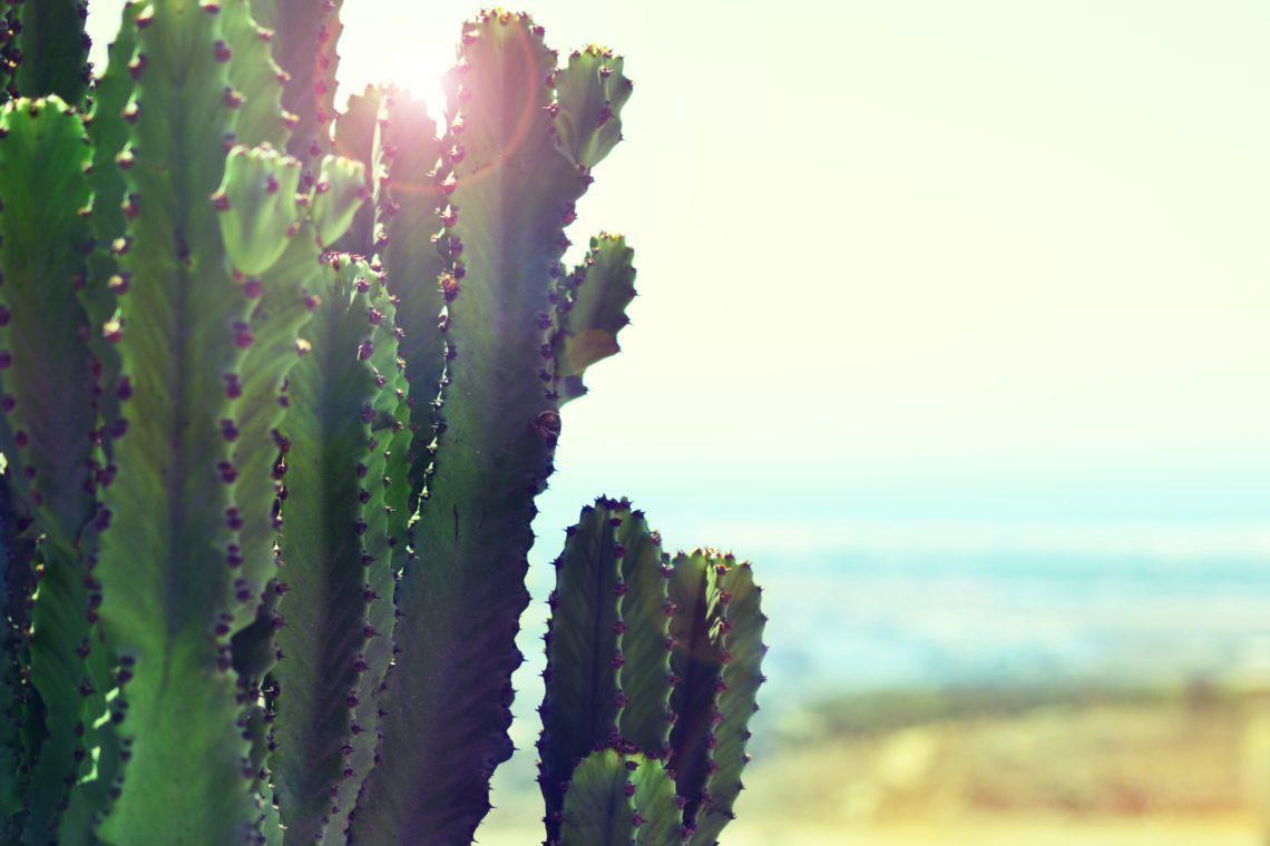 cactus-1140x760