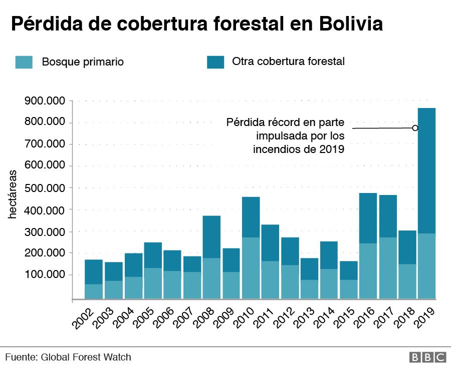_112705108_perdida-bosque-primario-bolivia-nc