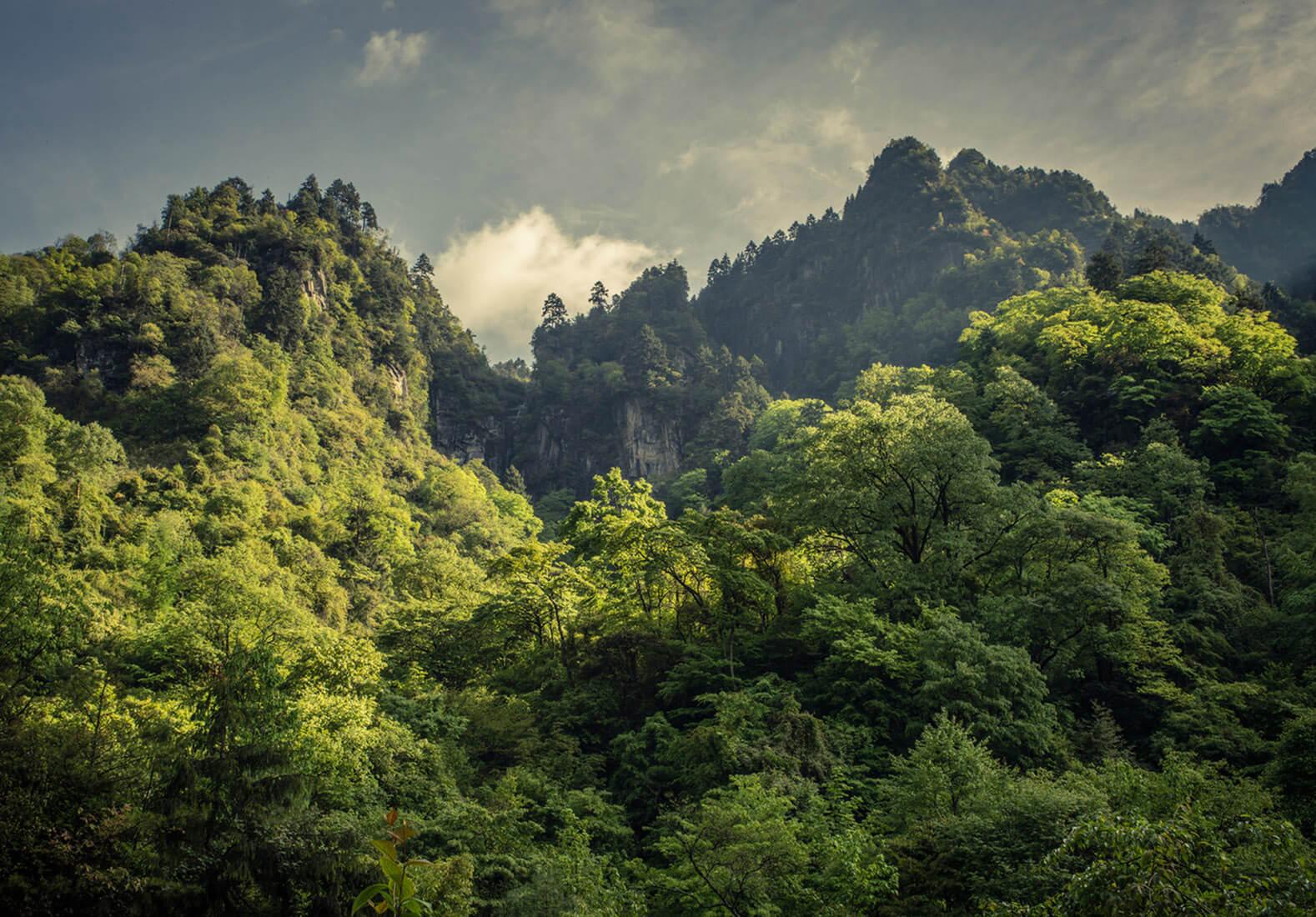 china-soldados-plantan-arboles-cambio-climatico-contaminacion-2
