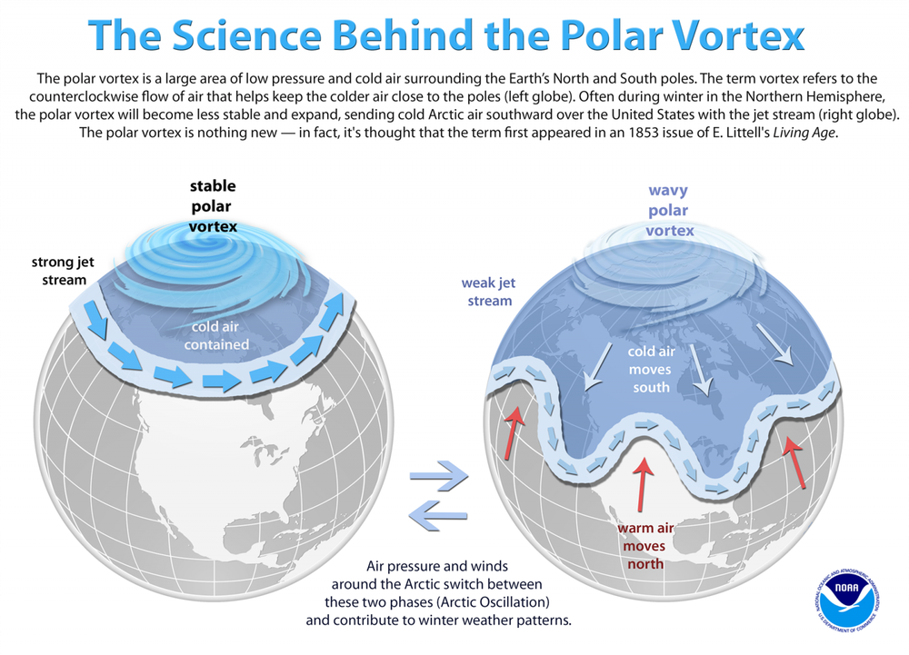 Vortice-Polar