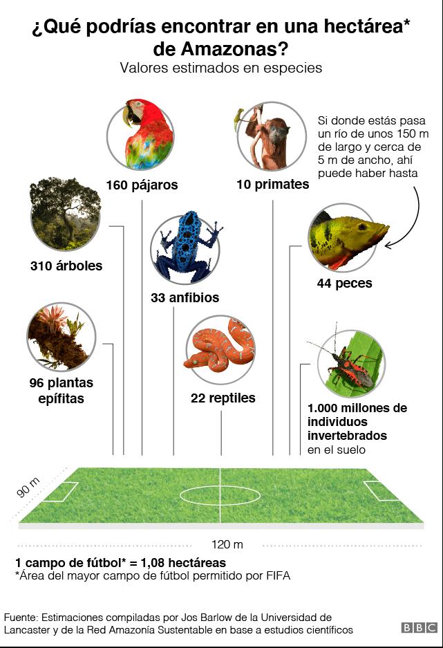 bioma-hectarea-amazonas-nc