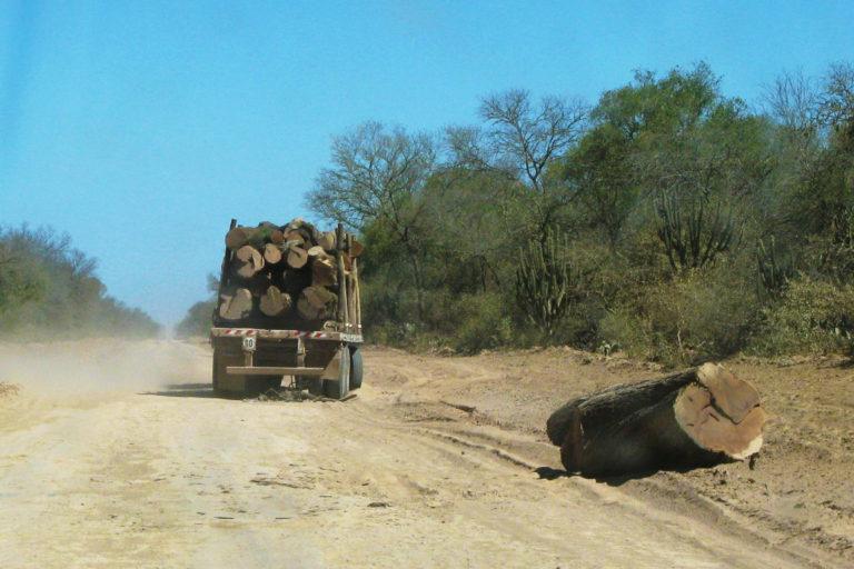 gran-chaco-deforestacion-argentina-14-768x512