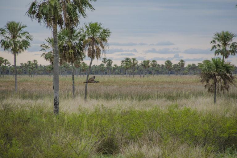 gran-chaco-argentina-12-PN-Chaco-Foto-Parques-Nacionales-03-768x512