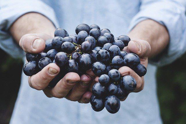 50e9d5414952b114a6da8c7ccf203163143ad6e55252704c712b_640_berry-harvest