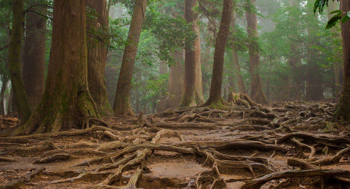 arboles-seres-elevados-wood-wide-web
