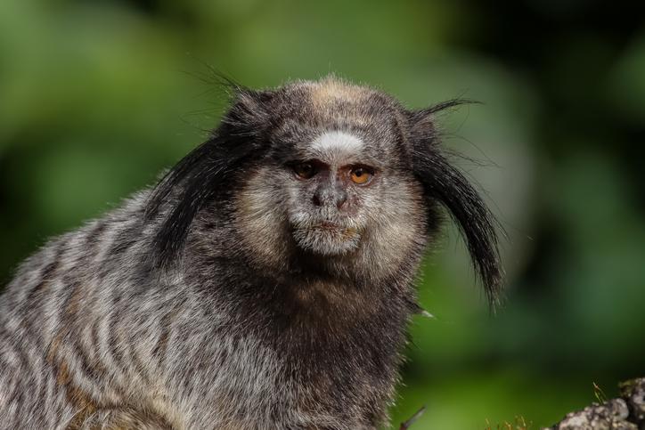 deforestación-animales-estrés