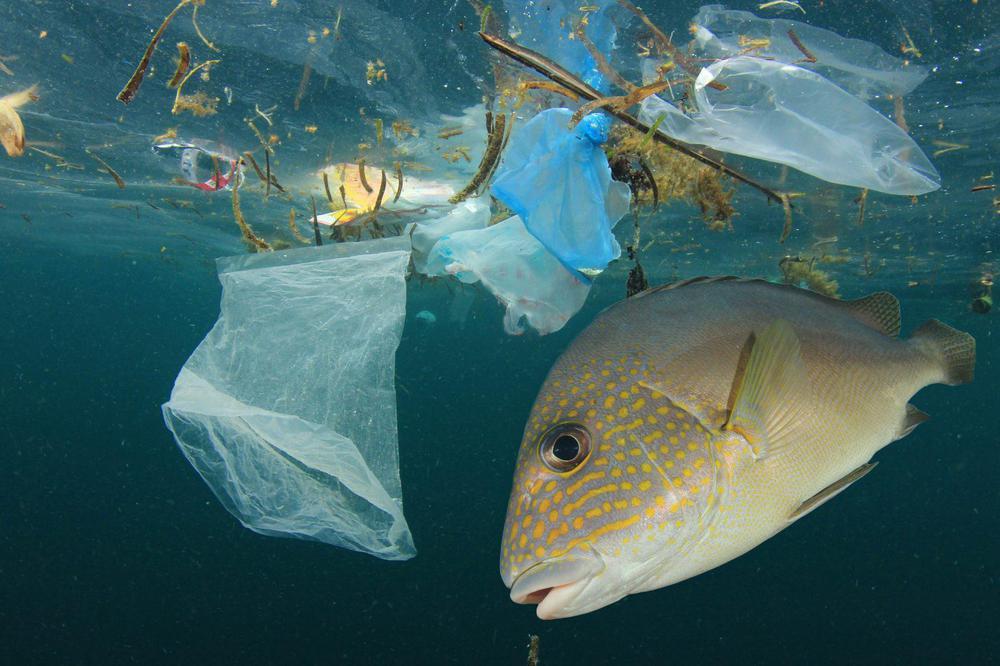 contaminacion-mar.05-02-201.medio-ambiente-1536x1024