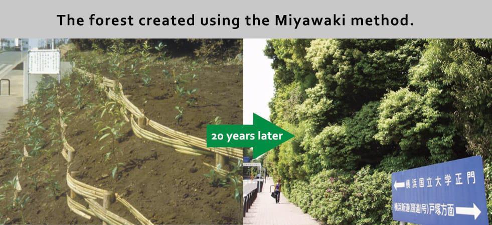 Método-Miyawaki147