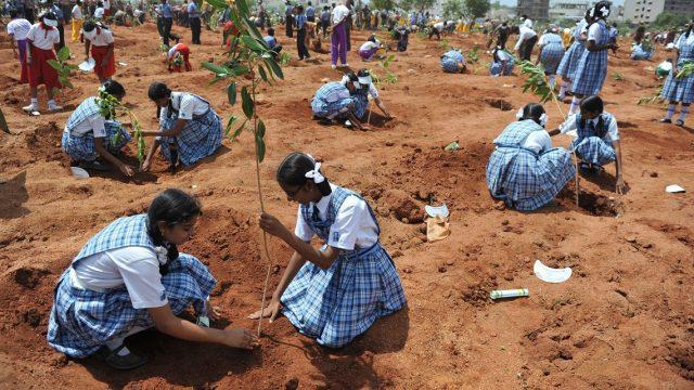 Plantacion-arboles-India2-e1594138091220