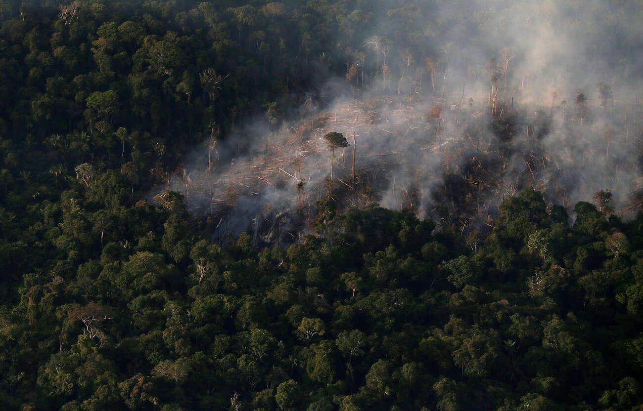 image1-burnt-forest